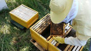 Steinweilerer Honigmanufaktur